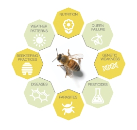 Multiple_Factors_Affecting_Bee_Health